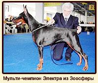 Мульти-чемпион Электра из Зоосферы