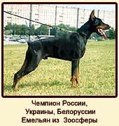 Чемпион России, Украины, Белоруссии  Емельян из Зоосферы