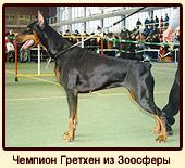 Чемпион Гретхен из Зоосферы