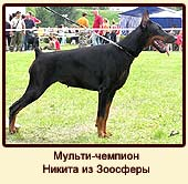 Мульти-чемпион Никита из Зоосферы