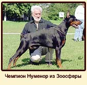 Чемпион Нуменор из Зоосферы