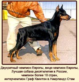 Двукратный чемпион Европы, вице-чемпион Европы,  Лучшая собака десятилетия в  России, чемпион более 10 стран, интерчемпион Граф Квинтон в.Ниирландс Стам