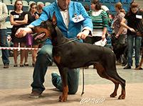 САС-выставка собак всех пород