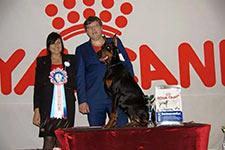 Региональная выставка собак всех пород