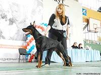 САС-выставка «Кубок Алисы»