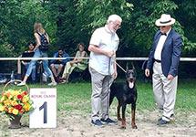 САС-выствка «Планета собак»