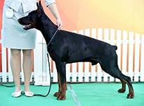 САС-выставка «Солнечный пес»