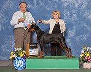 Выставка Американского Кеннел Клуба (организатор - Lake Shore Kennel Club in Crown Point IN)