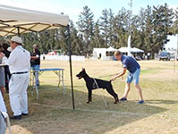 САС-выставка «Autumn Dog Show at Episkopiana»