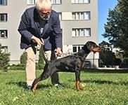 12 октября 2018 в Варшаве состоялась фото-сессия ЛОМОНОСОВ ИЗ ЗООСФЕРЫ (Себастьян из Зоосферы  х  Ирис Миа из Зоосферы). Ему 3 мес.