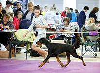 САС-Всероссийская выставка «Дельта-Пал»