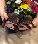 16.04.2019 was born litter after Satiago iz Zoosfery and Cincinnati iz Zoosfery.