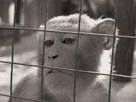 В нашем доме обезьяна